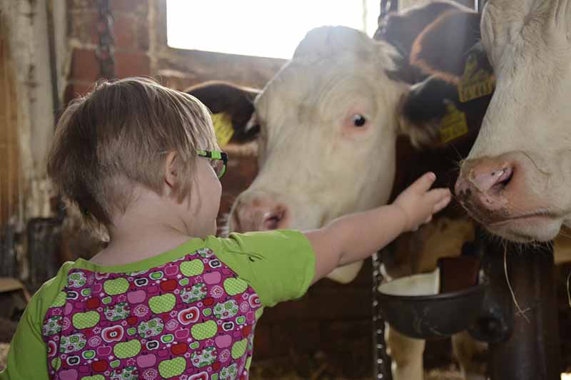 Picture of a child living with a disability patting a cow
