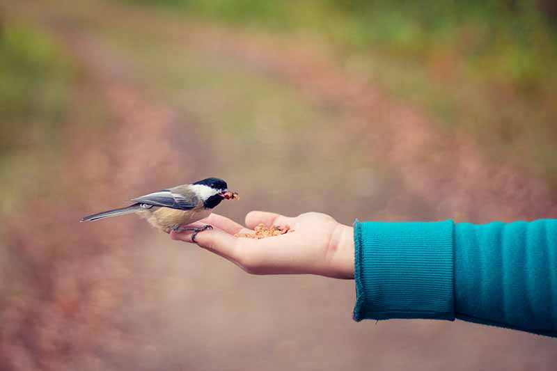 picture of a nad full of seed feeding a bird