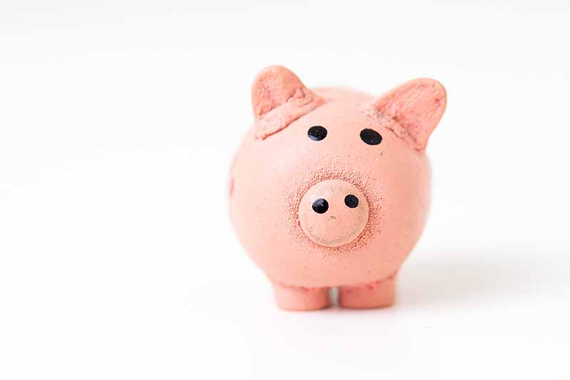 Picture of a white background with a pink piggy bank