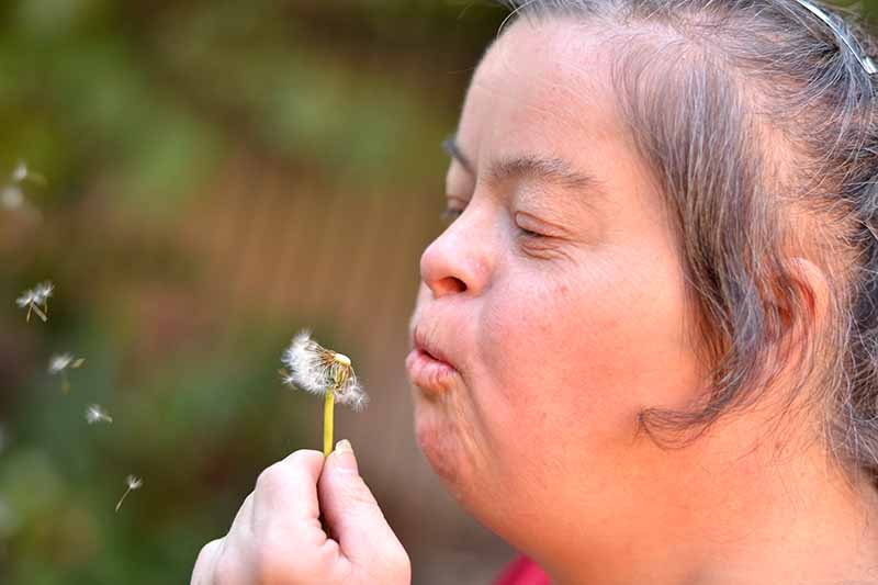 Girl blowing a dandelion flower and making a wish